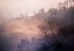 Mystic Fog (FGconclusion) Tags: winter woods woodland mist fog cold freezing frost gorge avon sunrise dream dreamscape lighting lowtemperature bristol forest trees landscape visitengland visitbritain somerset beautiful mystical enchanting 2016 december sky nikon 18200mm d7100 uk leefilters outdoorphotography outdoors outdoorphotographer moody scene flickr atmospheric atmosphere