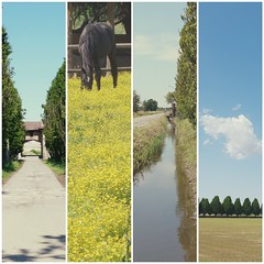 collage2 (storvandre) Tags: storvandre milano milan parco agricolo countryside lombardia lombardy bike biking