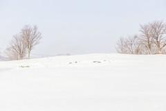 Snow 雪 @秋田 Akita (Jing Liao 廖品淨) Tags: 秋田 akita snow 雪 white 白い 白 winter 冬 雪景 日本 japan