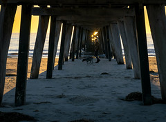 Under the Jetty (Norma Martiri) Tags: largsbay largspier jetty adelaide southaustralia australia sunset dog dogwalk animal beach sea sand