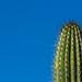 One cactus