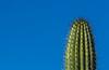 One cactus (docoverachiever) Tags: bluesky plant minimalism desert nature thorns spines cactus arizona saguaro blue green detail arizonapassages thechallengegame