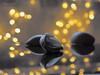 Reflections ... (MargoLuc) Tags: garlic reflections table golden bokeh stilllife selective colours white grey tones lights indoor