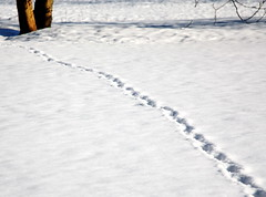Winter diagonal (Sappho et amicae) Tags: minimalism sapphoetamicae željkagavrilović canon450d winter traces