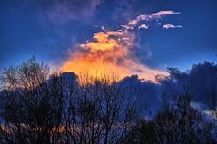 Clouds on fire, Norway (Vest der ute) Tags: xt2 norway rogaland haugesund clouds trees winter bluesky fav25 fav200