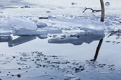 Reflection (Cornelia Pithart) Tags: ast aussenaufnahme eis fluss natur see spiegelung wasser winter branch froze gefroren ice lake nature outdoor outdoors reflection river water