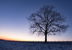 sunrise winter (vincent.quennouelle) Tags: sunrise winters snow tree alone cold paysage landscape weather meteorology froid arbre glace neige