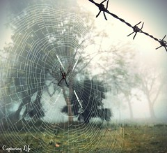 spider cobweb winter project365 365 mobilephotography... (Photo: akshaysinha1 on Flickr)