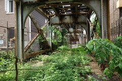 Lush life (KevinIrvineChi) Tags: above railroad light urban chicago green leaves train photography photo leaf rust cta under tracks rusty photograph greenery lush ravenswood bowmanville chicagoist ctabrownline