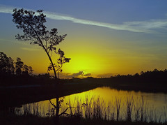 Bent Tree Sunrise (tclaud2002) Tags: sun tree sunrise canal florida bent martincounty joneshungryland