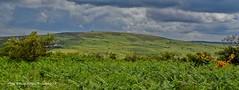 14 - Depuis les crtes, panorama sur le Tuchen Kador (LOUIS TOSSER) Tags: france fleurs bretagne pierres paysages monts finistre calvaire mgalithe darre commana