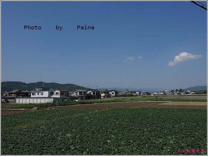 和歌山大池遊園-平池綠地公園 (15).JPG