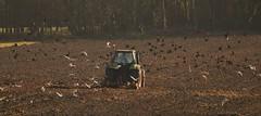 DSC_0034 (13) (jon.brinn352) Tags: tractor field birds earth gulls flight crows plough rooks