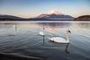 Lake Yamanaka winter view (shinichiro*@OSAKA) Tags: 南都留郡 山梨県 日本 jp 20160219ds25934 2016 crazyshin nikond4s afsnikkor2470mmf28ged yamanashi japan 山中湖 lakeyamanaka 白鳥 swan february winter 31124597953 201701gettyuploadesp