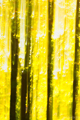 Light through the falling leaves (Maurizio Scotsman De Vita) Tags: natura foresta foglie trunks landscape astrazioni nature abstract plantsflowers italia panorama fall alberi mixedmedia colourful trees boschi abstractions abruzzo parconazionaledabruzzolazioemolise forest paesaggio leaves tronchi parks autunno autumn woods parchi astratto colorato impressionistic impressionistico livecolours pnalm civitellaalfedena