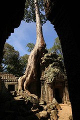 Hiddden gem (tact1) Tags: stone carving angelinajolie jungle cambodia tombraider taprohm temple tree