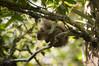 0308 (namografandosz) Tags: namografandosz nature couple travel love d3200 monteverdemg monteverde squirrel esquilo