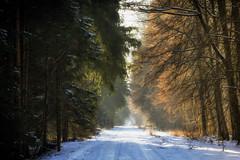 Wintersong (Stefan (ON/OFF)) Tags: winter tree trees treemendous forest passage walk trail view forestscape nature naturephotography road way path pathway maitenbeth munich snow sonya7m2 sel90m28g 90mm deutschland bayern münchen
