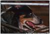 20050605-20050605-File18576-Edit.jpg (Eddie Smith) Tags: toronto 2016edit istds hidingunderthetable olddog tasha pentaxfa282003556al ontario canada pentax goodgirl pentaxistds colourefexpro4