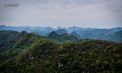 Illusion (CH-Romain) Tags: vietnam viet vietnamese vietnamien asia asiatique asie arbre nature horizon tree montagne mountain halong bay baie cat ba island ile skyline