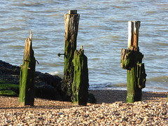 Once a jetty (Granpic) Tags: suffolk felixstowe derelict oldjetty weatherworn