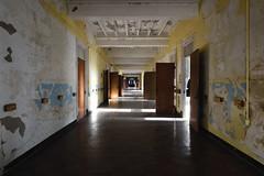 yellow hall1 (Mycophagia) Tags: