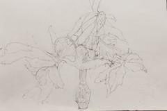 Csyneilesis palmata (dried) (Kazuko Tsukioka) Tags: drawing pencil driedplant