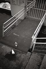 (Alfonso Lazo) Tags: olympus xa2 trix 400 xtol 13