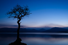 Lone Tree on the Loch (_rusty_t) Tags: scotland landscape loch lomond night photography tranquil lake tree long exposure calm solitary mountains twilight refelctions