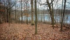 Asylum Lake (mswan777) Tags: hiking lake water leaf tall kalamazoo asylum michigan ice cold winter landscape preserve woods nikon d5100 sigma 1020mm scenic