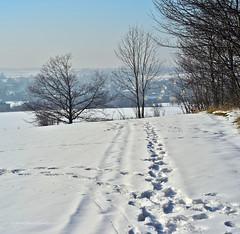 Orzech - winter landscape ❄ (ChemiQ81) Tags: polska poland polen polish polsko chemiq d5100 nikon nikkor polonia pologne ポーランド بولندا полша poljska pollando poola puola πολωνία pholainn pólland lenkija polija польша пољска poľsko polanya lengyelországban lengyel lengyelország польща польшча 2017 winter zima outdoor śnieg snow white biały śląsk schlesien silesia slezsko orzech piekary śląskie kozłowa góra świerklaniec garb tarnogórski
