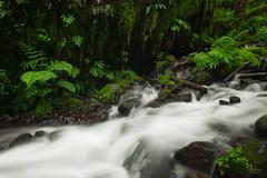 Rush (jpeder55) Tags: columbiarivergorge fujifilm jpedersenphotography landscape nature oregon spring