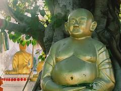 Ubon Ratchathani - Thailand (jcbkk1956) Tags: thailand ubonratchathani temple buddhas contrejoure contrejour trees buddhism buddhist templegrounds samsung wb100 worldtrekker viagginelmondo