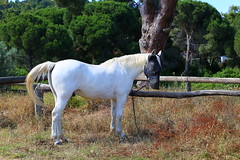 Aris (giannhs_sk) Tags: horse holiday canon greece riding skiathos 6d ef50f14