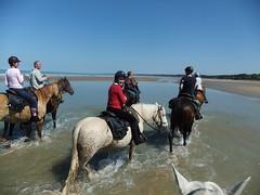 Randonnée Equid'ext, plages du débarquement, juin 2015 (tordouetspirit) Tags: horses france beach cheval juin omaha normandie normandy arromanches 2015 equidext httpwwwequidextfr équitationdextérieur