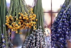 Lavender Festival 6.20.15 11 (Marcie Gonzalez) Tags: resort highland springs highlandspringsresort