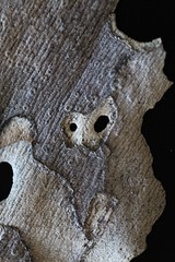 IMG_4986 (j.towbin ) Tags: macro texture nature faces holes bark minimalsim allrightsreserved
