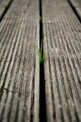Rayas en el suelo (Monica Fiuza) Tags: puerto tablas portonovo