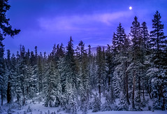 Snow and Forest, Mammoth, California (Wes Pettus) Tags: mammoth ca california snow trees pine forest evening sunset moon blue cold
