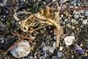 El Abandono 06 (Alejandro...) Tags: alambre basura ensayo llave oxido ushuaia