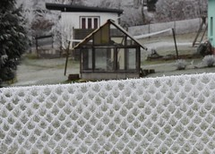 (:Linda:) Tags: germany thuringia village bürden hoarfrost metalfence rhomb greenhouse