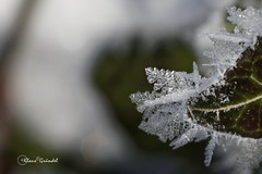 IMG_8304   Winter Ostalb (Canonklick) Tags: canon 6d macro 100mm winter eis ostalb