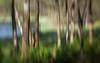 The Woods at Sælensvannet (Anne Worner) Tags: anneworner icm ononesoftware forest incameramovement landscape layers moton nature panning texture wideformat woods lensbaby composerpro sweet35