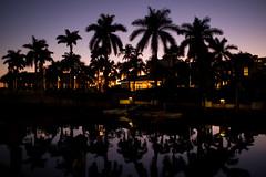 Naples, Florida (romanboed) Tags: leica m 240 summicron 28 usa florida naples winter christmas travel sunset dusk palms palm trees reflection