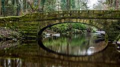 2017-01-17 Rivelin-7442.jpg (Elf Call) Tags: nikon rivelin river yorkshire water stream 18105 sheffield steppingstones waterfall d7200 blurred