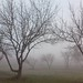 Foggy Trees (jmf1007) Tags: janicemariefoote lgcameraphone lgcameraphones naturallight winter winterfog fog foggytrees foggytreeschallenge wintertrees winterbaretrees baretrees trees davisca