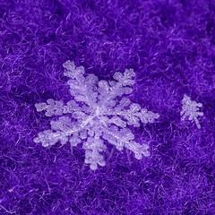 Explore #18 on January 9, 2017 (Virginia Rivers) Tags: macromondayinspiredbyasong texture outdoor snow snowflake macro canoneos180mmmacrolens canon canoneos60d wow