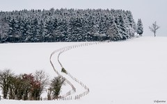 15012017-DSC_0012 (vidjanma) Tags: hiver chemin clôtures ardenne eige