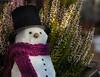 3/52 It's the little things .... (FocusPocus Photography) Tags: schneemann snowman schnee snow winter heidekraut heather