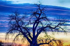 Morning Blues (Striking Photography by Bo Insogna) Tags: blues colorful nature landscapes treestree country colorado stockimages fineartprints insogna
